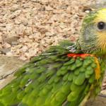 Cuidados com as aves no inverno!