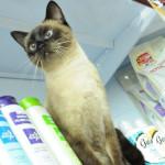 10 motivos para amar os gatos