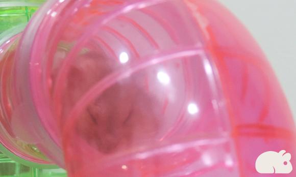 Hamster Tubos