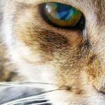 Úlceras de Córnea em Pets? O que é?
