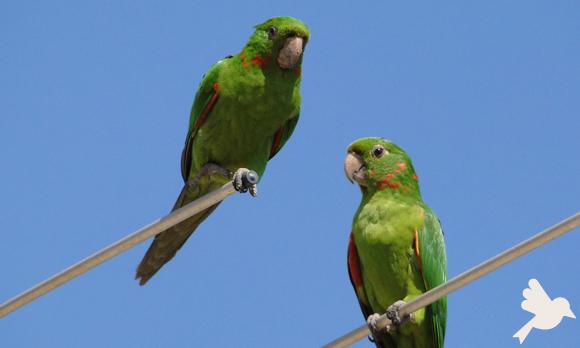 Aves e intoxicação