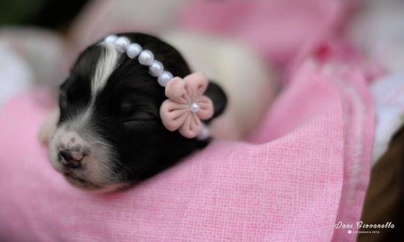 Fotos Pets!