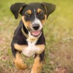Fotos de Pets!