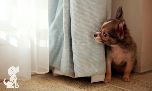 """""""Meu cachorro tem medo de fogos de artifício!"""""""