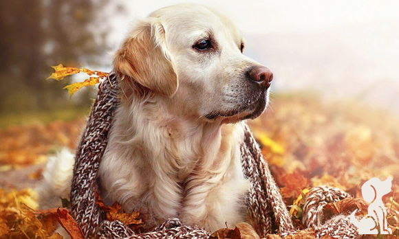Tosa no outono
