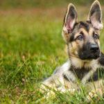 Você sabe o que significam as ações do seu cachorrinho?