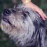 O que é a Pet Terapia?