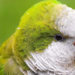 Papagaios e Caturritas: como cuidar?