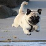 Banho em Pets: dúvidas mais comuns!