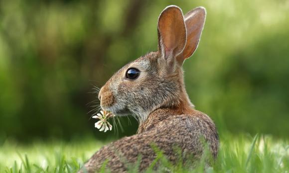 Coelho da Páscoa é coelho pra vida toda!