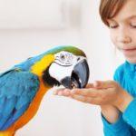 Quais as vantagens das rações extrusadas para aves?