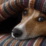 Cuidados redobrados com os pets no inverno