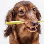 Saúde começa pela boca: inclusive a do seu pet!
